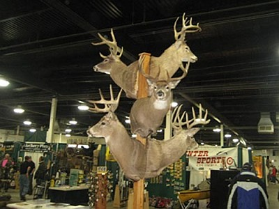 Deer Display